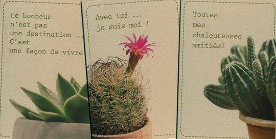Cactus-nouveau-!